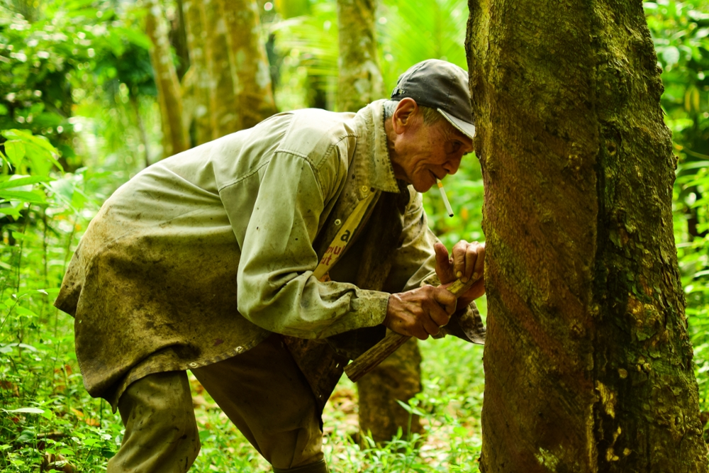 Man with Rubber Tree